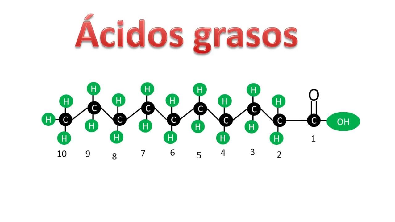 Acidos Grasos que función tienen