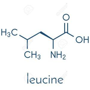 Leucina y el crecimiento muscular