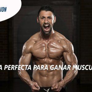 La dieta perfecta para ganar musculo