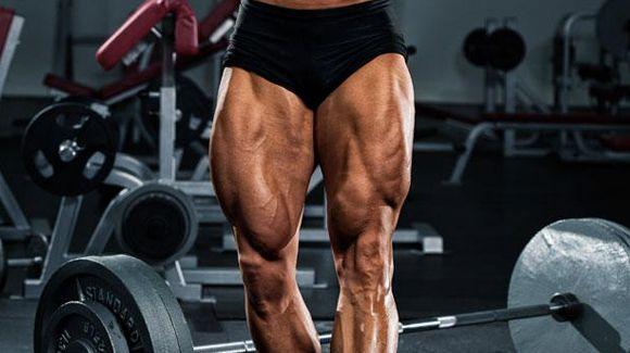 Huesos y músculos de los miembros inferiores (1)