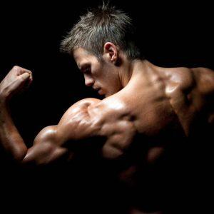 La fisiología muscular 1.0